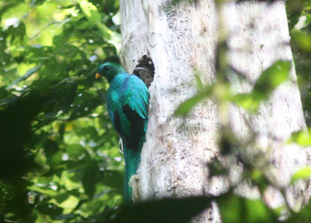 Birdwatching Selva Negra Ecolodge Activities