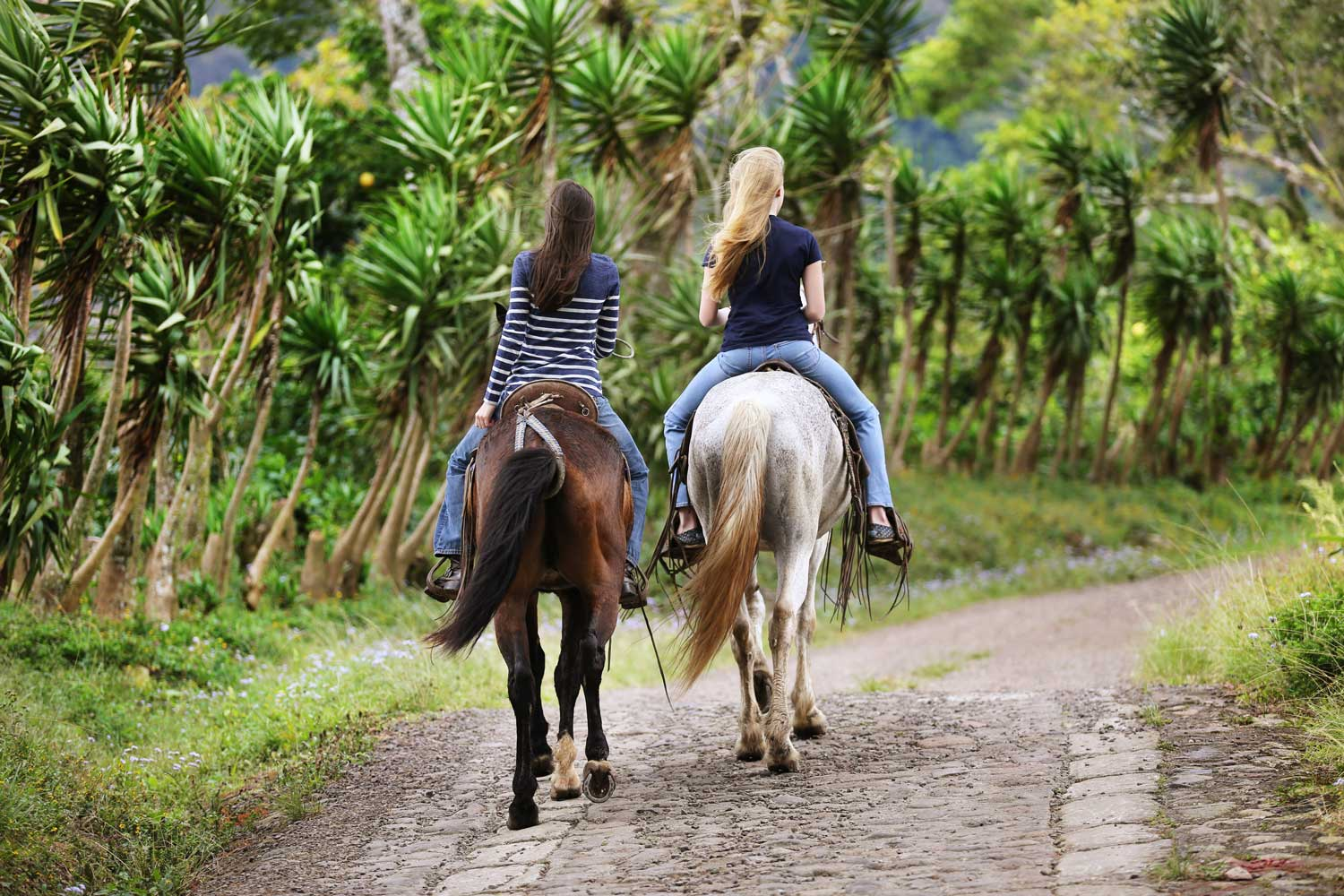 Horseback riding Selva Negra Ecolodge Activities