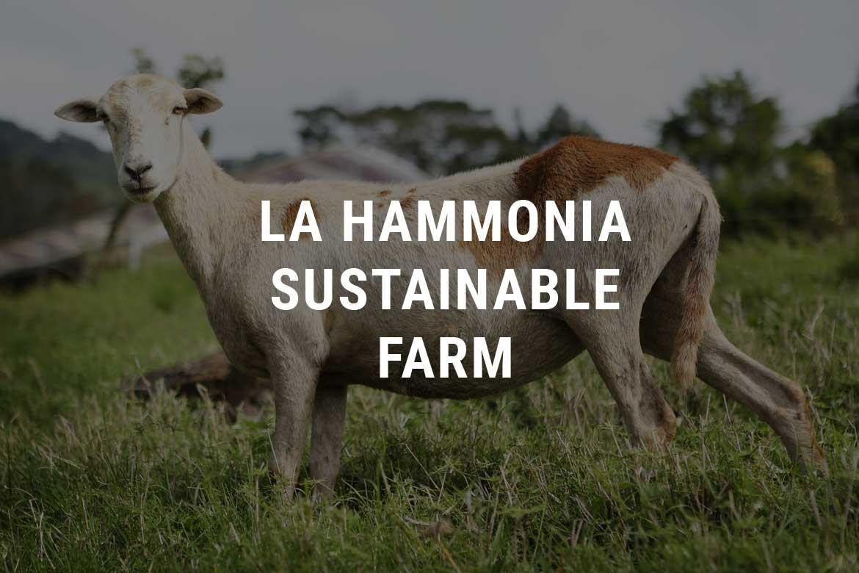 Sustainable Farm Selva Negra Ecolodge
