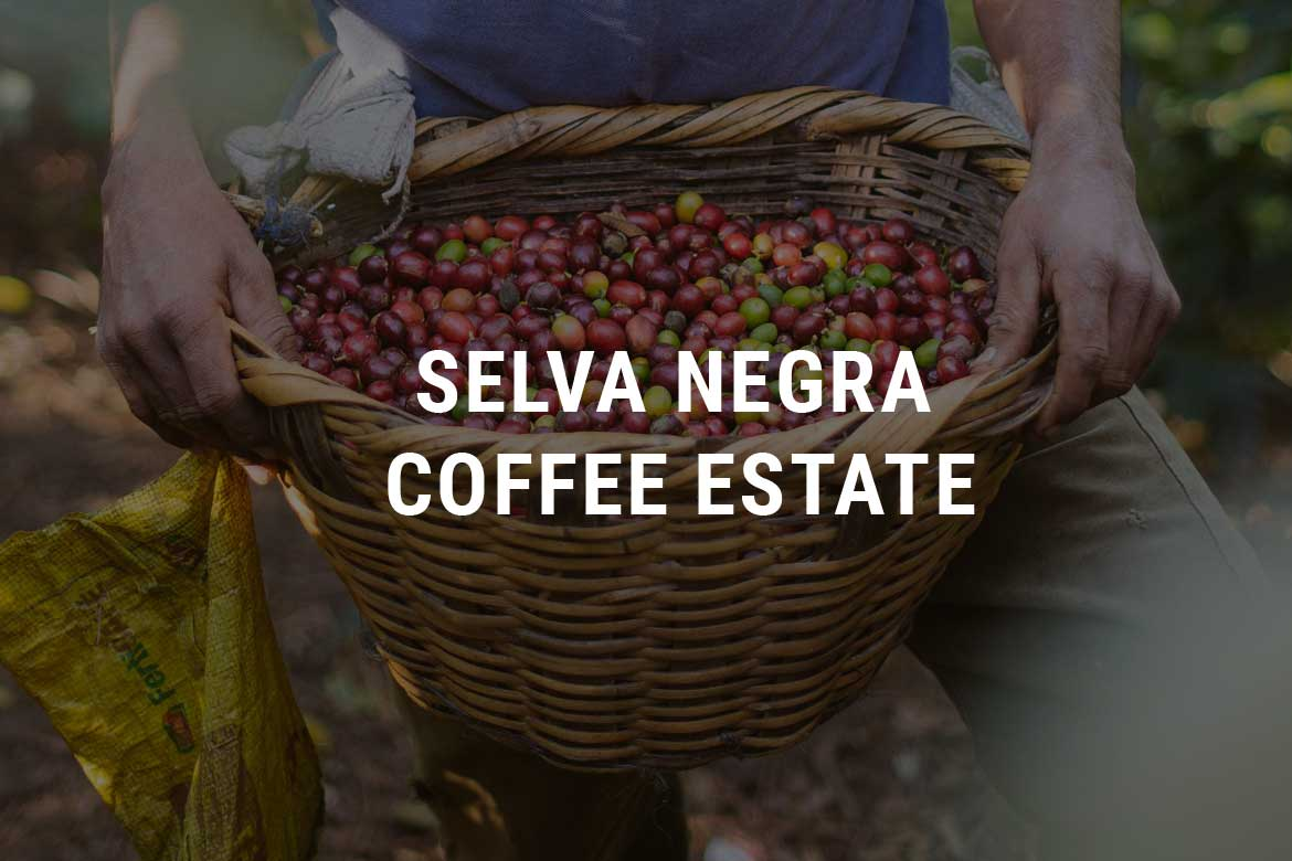 Selva Negra Coffee Estate Selva Negra Ecolodge