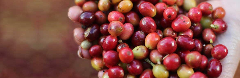 Coffee Tour Selva Negra Ecolodge